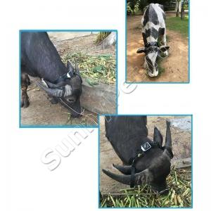 GPS ошейник для коров, лошадей и крупного рогатого скота с солнечной батареей ReachFar